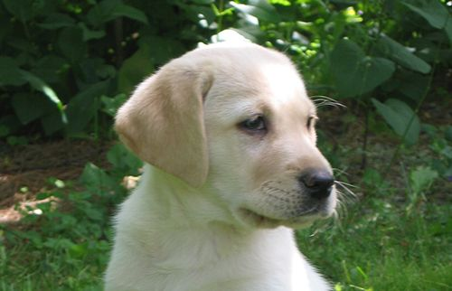 Realm Supports Guide Dogs for the Blind in 2019